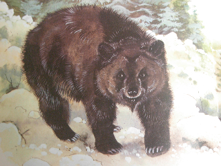 Ursus arctos crowtheri Drawing